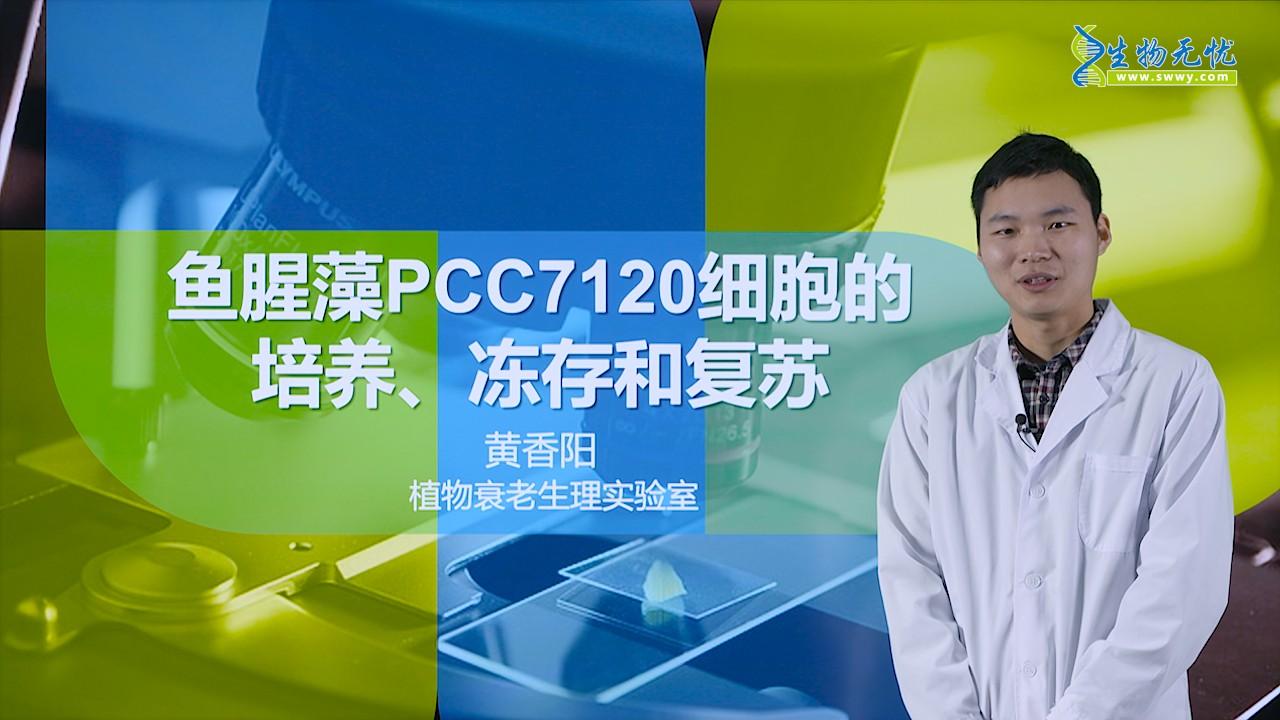 黄香阳:鱼腥藻PCC7120细胞的培养、冻存和复苏