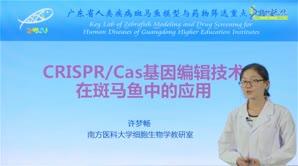许梦畅-CRISPR/Cas基因编辑技术在斑马鱼中的应用