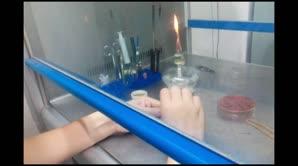 细菌的生化试验